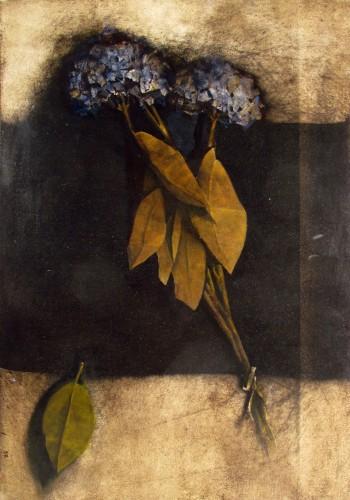 Ortensie In Nero, 2006